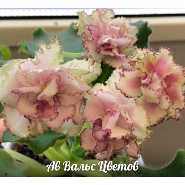 АВ Вальс цветов