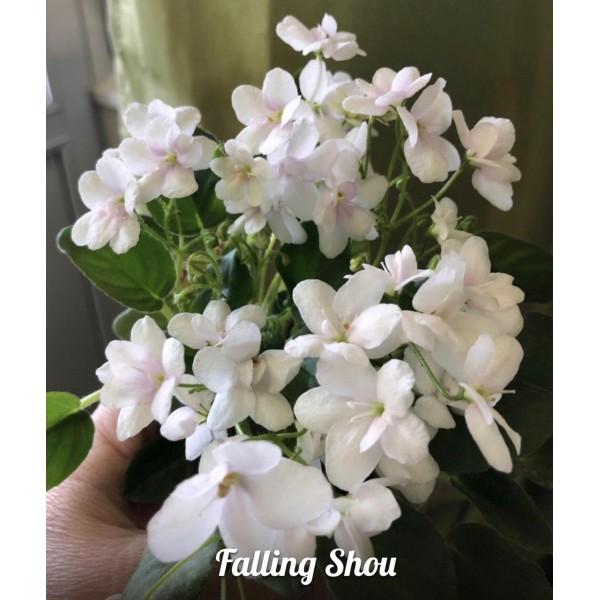 Falling show