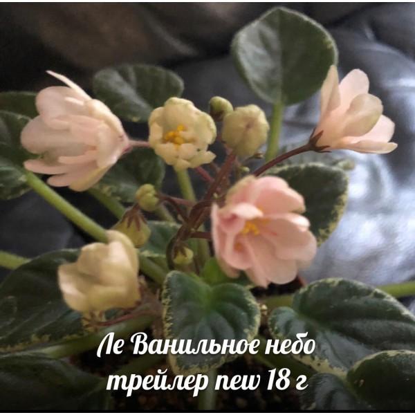 ЛЕ Ванильное небо new 18