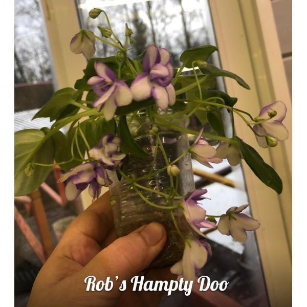 """Rob""""s hampty doo"""