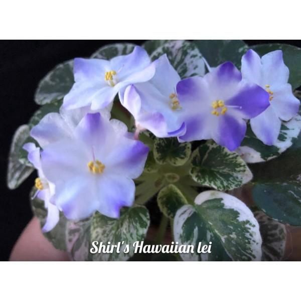 """Shirl""""s hawaiianlei"""