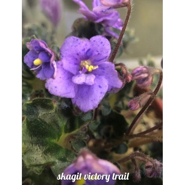 Skagit victory trail