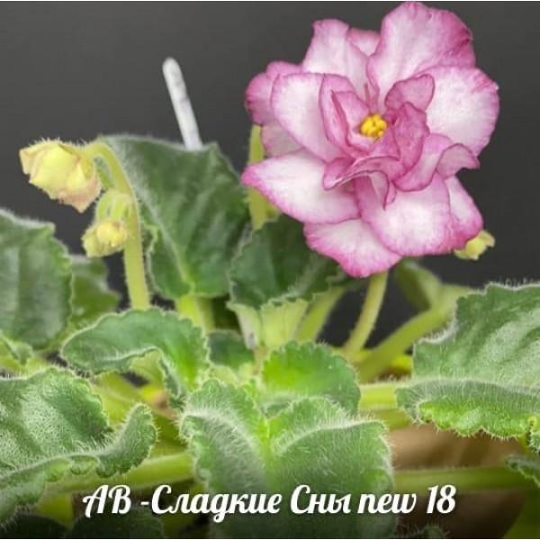 АВ Сладкие сны new 18