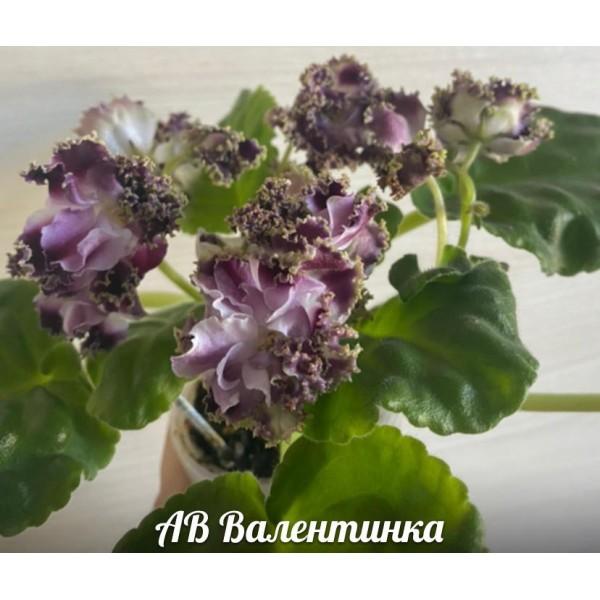 АВ Валентинка