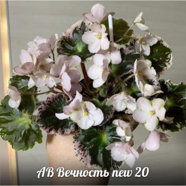 АВ Вечность new 20