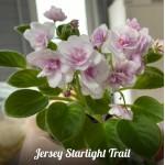 Jersey starlight treil  R Kurzynski