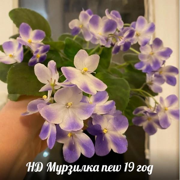 НД Мурзилка new19