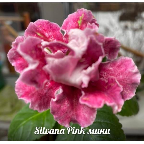 Глоксиния Silvana pink мини